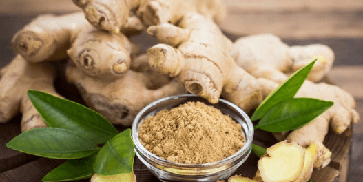 Ginger – Zingiber officinalis