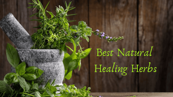 best natural healing herb