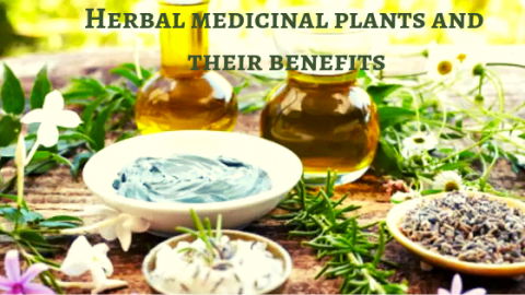 herbal medicinal plants and their benefits