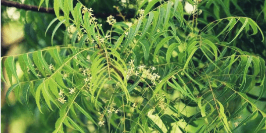 neem care your skin